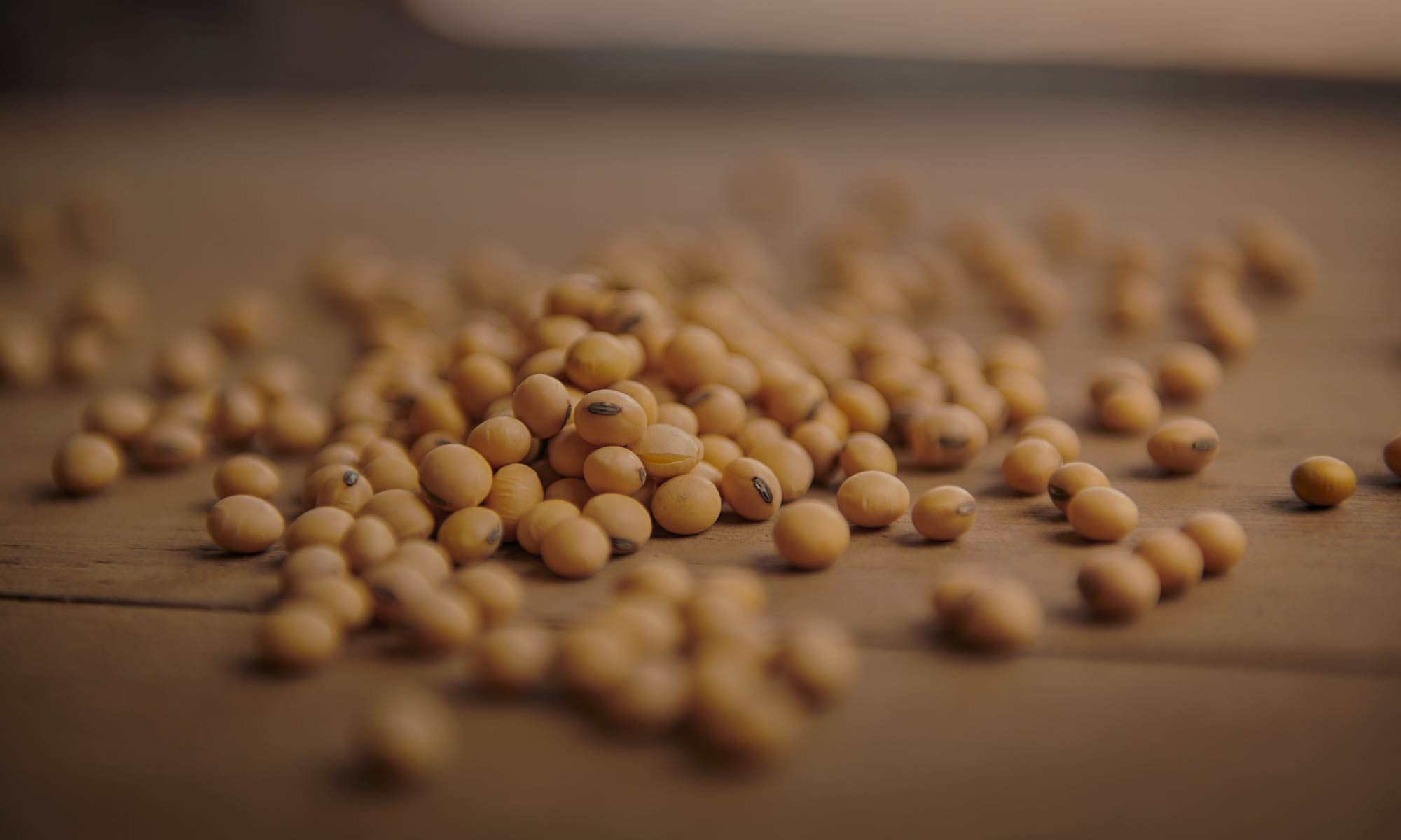 QUA-Website-Header-Soybeans